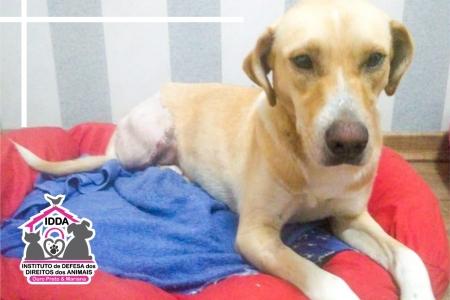 Imagem que representa a notícia: A história da cachorrinha Chiquinha, que sensibilizou as equipes da UVZ e do IDDA Ouro Preto e Mariana